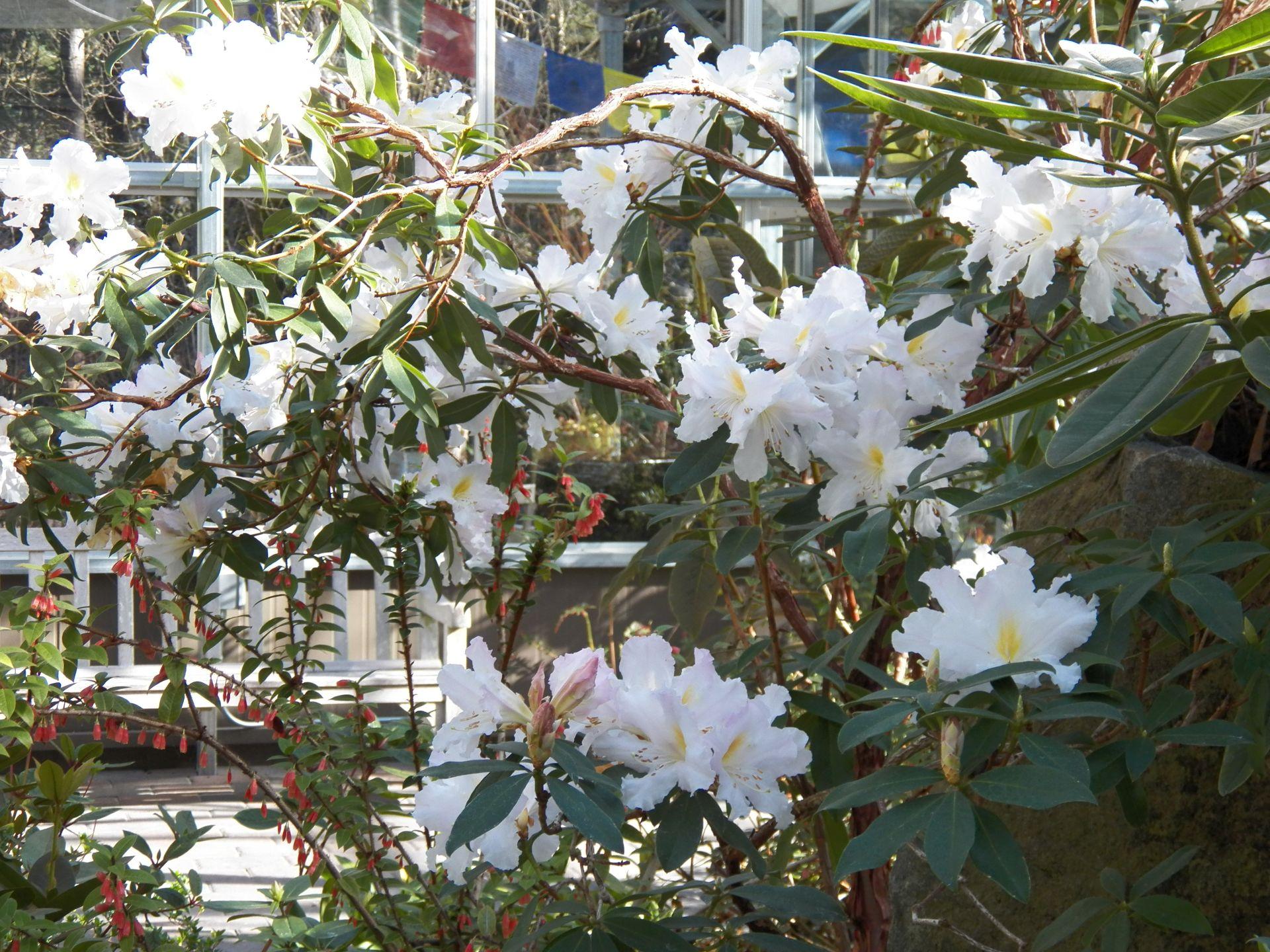 A Trip To The Rhododendron Species Garden Northwestphotos