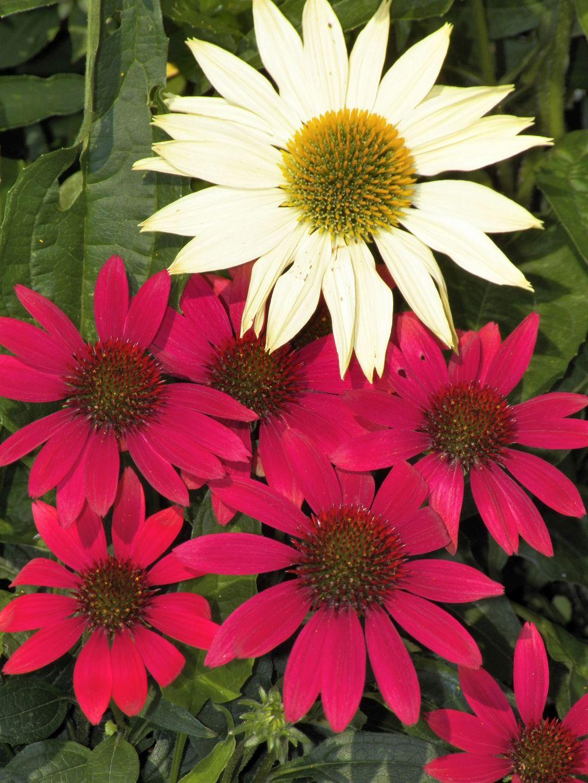 Colorful August Gardens | northwestphotos